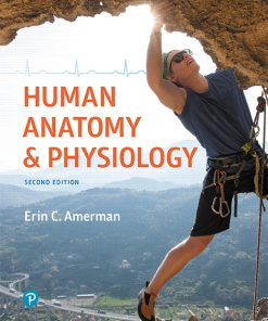 Test Bank for Human Anatomy and Physiology 2nd Edition Amerman