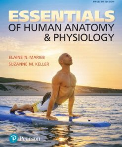 Test Bank for Essentials of Human Anatomy and Physiology 12th Edition Marieb